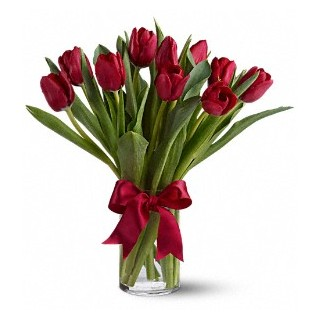00 Radiantly Red Tulips