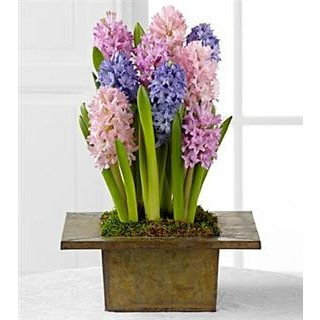 Shades of Spring Bulb Garden by Better Homes and Gardens