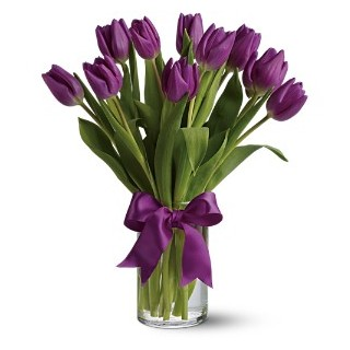 00 Passionate Purple Tulips